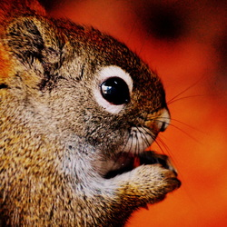 Onze Squirrel aan huis