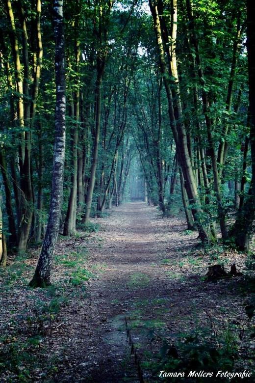 Lunters buurtbosch