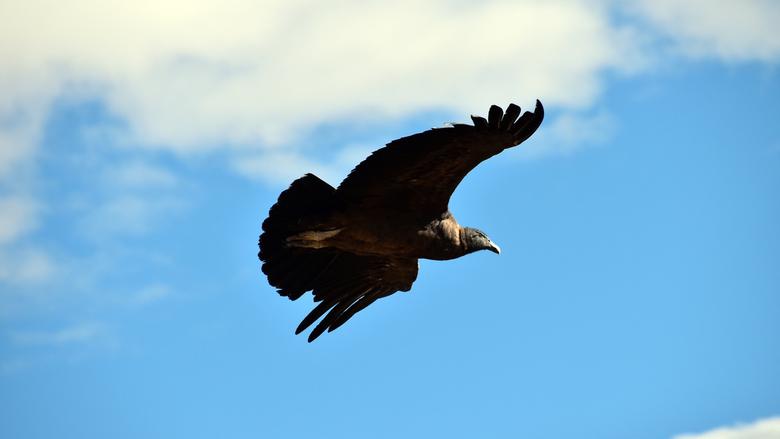 Andes Condor II