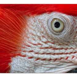 'Bird's Eye'