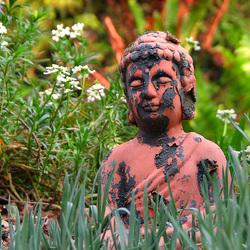 New skin for Buddha II