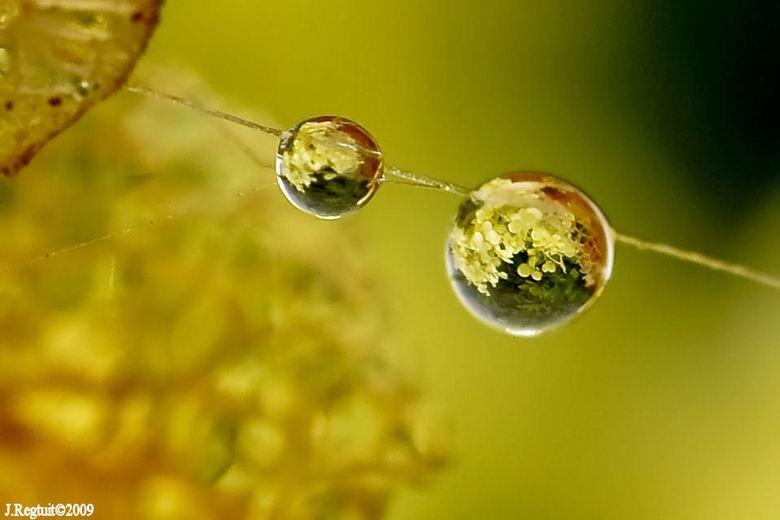 microwereldtjes - hortensia gereflecteerd in de druppelts in een spinneweb