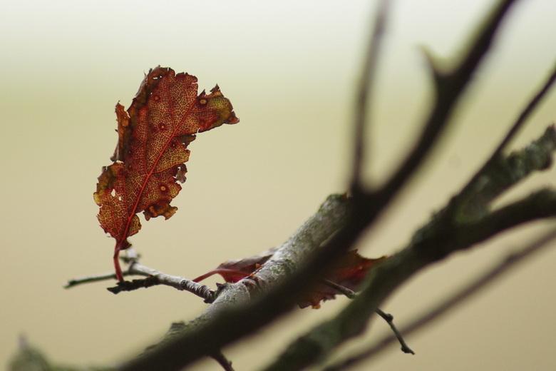 Herfst - Is nu zichtbaar