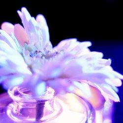 Bloemen houden van ...