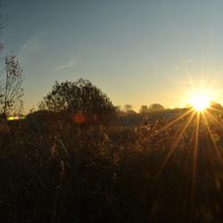 Een zonsopkomst in Westzaan