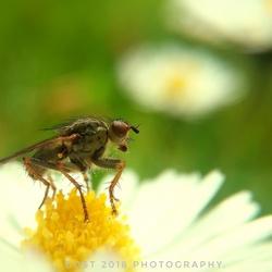 Little fly.