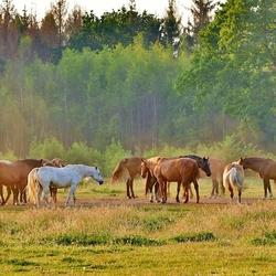 Horse-meeting