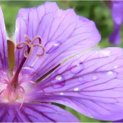 Fleurig