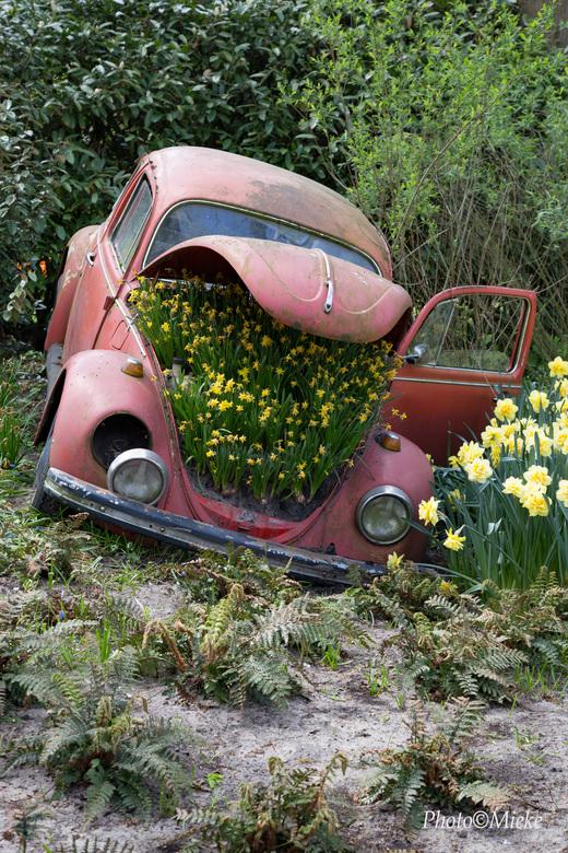 """Kleurrijk einde - Afscheid met bloemen<br /> <br /> Bedankt voor jullie reacties op<br /> <a href=""""http://zoom.nl/foto/straatfotografie/pak-de-bell"""