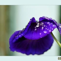 Lente regen