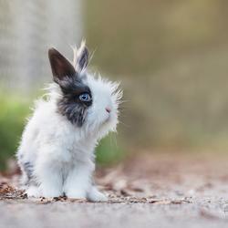 fluffy bunny...
