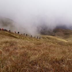 'Slang' in de mist