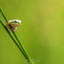 baby treefrog