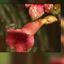 een beestje op een bloem...............