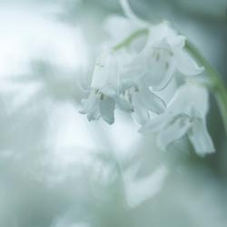 Door de bloemen gefotografeerd