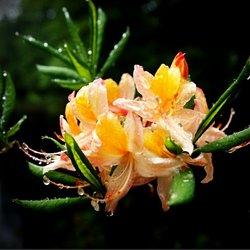 bloemen na de regen bui