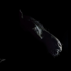 Fries paard