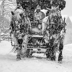 Sneeuw paard en wagen