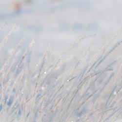 Snowy Cristals