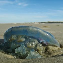 vreemde kwal op het strand van Ameland