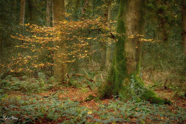 Herfst november 2018 02 - I love to walk in the forest for hours. Dreaming away with the sound of the waving trees. Smell the seasons and enjoy all th