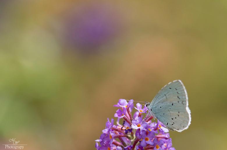Colors of nature - bij ons in de hoeksche is een mooi natuurgebied waar ze een tuin hebben aangelegd waar veel soorten vlinders komen. Een waar paradi