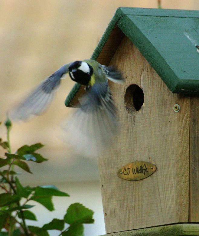 Uitvliegende Koolmees - Deze Koolmees in een tuin in Soest kunnen platen. Meer foto`s gemaakt maar deze past mooi in de wedstrijd beweging. Past dan o