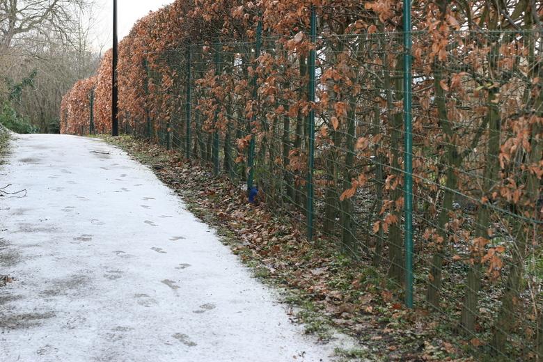 foto's maken in de sneeuw  - IMG_9416.JPG