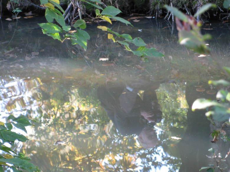 Onderwater fotografie - mijn vrouw wilde een foto van mij maken en zag mij in het water zie hier het resultaat.<br /> genomen met een canon <br /> c