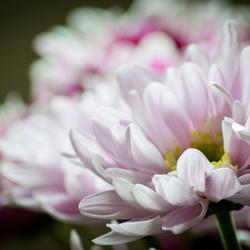 Mooi en zacht... Bloemen in het moment