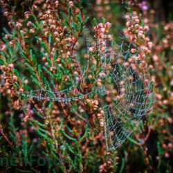 140928 Herfst Dauw spinnenweb. Slabroek-0055