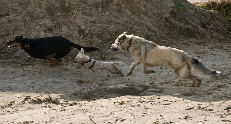 fotofinish - krijgertje spelen is nog steeds nummer 1 van de spelletjes bij de honden.