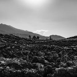 Lavavelden - Las Palomas - La Palma