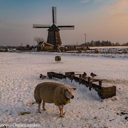 Hoe Hollands kan het zijn?