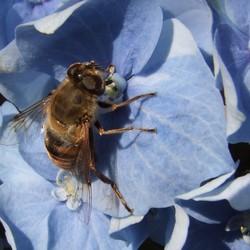 Eerste bijtjes dit jaar