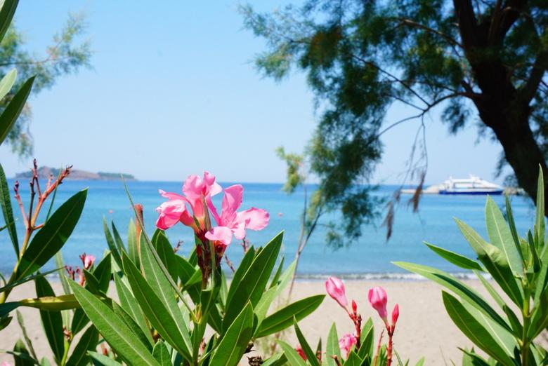 Kleine mooie dingen in de natuur - De geur van bloemen kan een mooie herinnering nog mooier maken!
