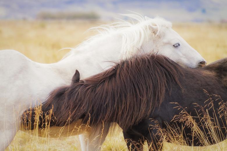 The Embrace - IJslandse elegantie