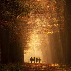 The fall Tenors