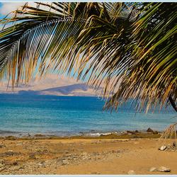 Strand en palmboom