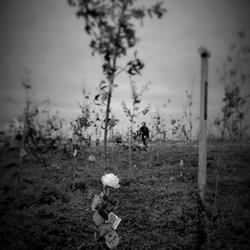 herinneringsboom