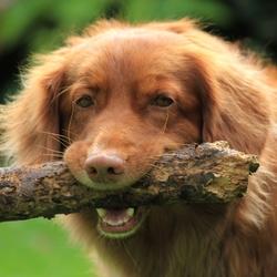 Zazu on a stick