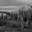 Olifanten Zuid-Afrika