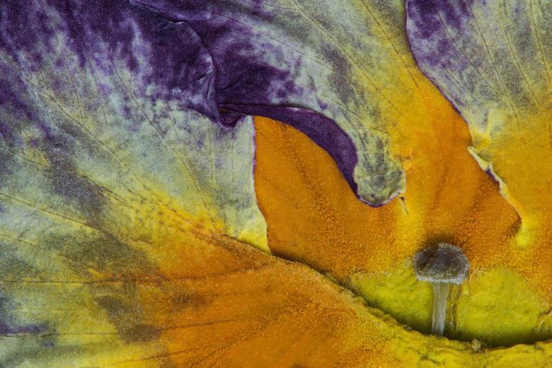 Primula-Abstract-02 - Een vervolg op de eerste versie,mensen van onze fotoclub vonden deze iets mooier vanwege het lijnenspel.<br /> Dank jullie wel