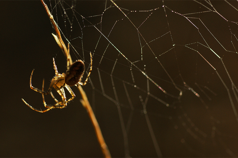 Spinnenweb in de ochtendzon - In het ochtendlicht genomen met de Tamron 90mm