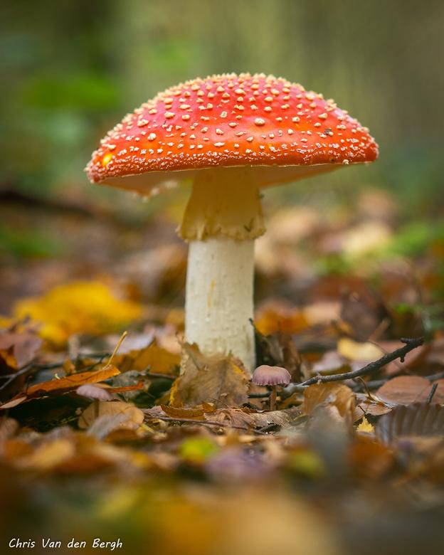 Leuke tijden in het bos - Het zijn mooie tijden om in het bos te vertoeven...