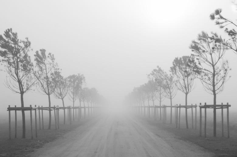 Het oneindige in de mist