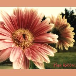 Pink Ribbon!!
