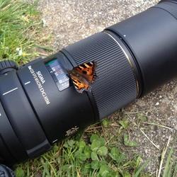Macrofotografie is soms lastig...
