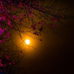 Herbstlichter Brückenkopf-Park Jülich