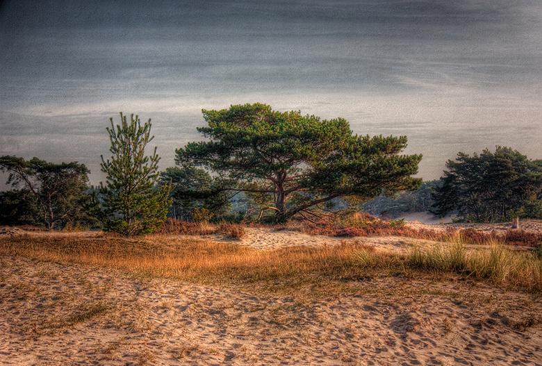 Soester duinen HDR 1 - Een van de drie HDR foto's die ik gemaakt heb van de Soester Duinen in dezelfde stijl. Alle drie 1 foto omgezet naar 32bit